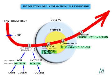 Schéma des potentiels de la méthode Potentialis